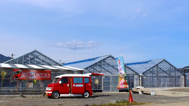 農園 宮崎県 延岡 おいしい 楽しい 川原いちご農園